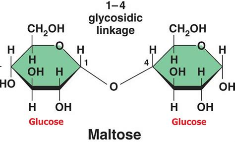 Maltose - Compositiom, Foods That Are Naturally High In